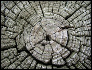 Tree_Rings_by_MomentsInTime
