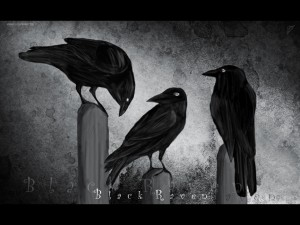 Black-Raven-wallpaper